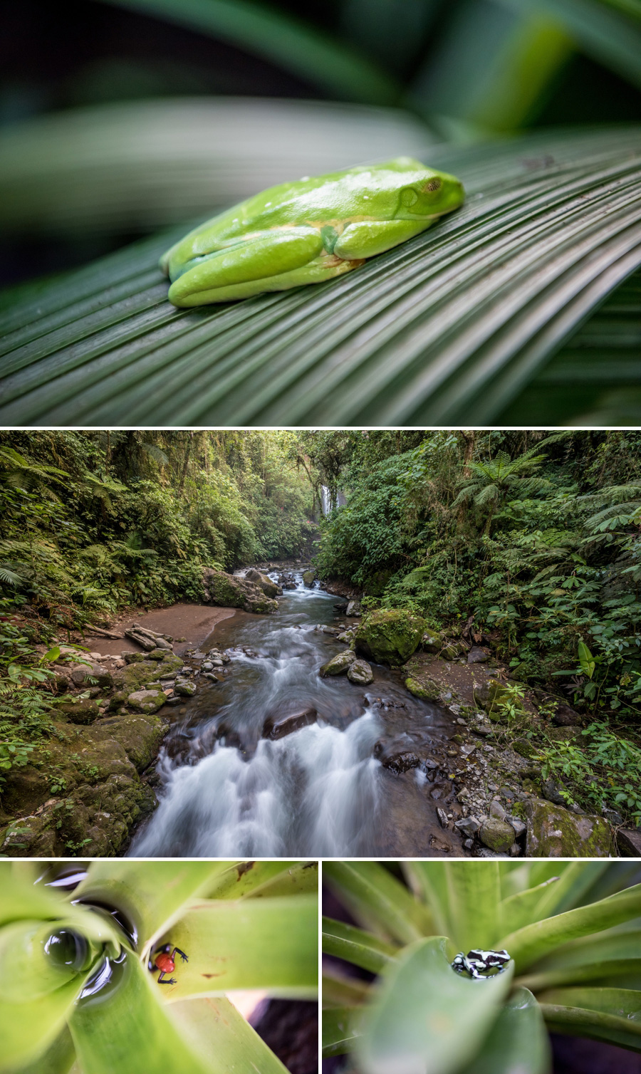 Costa Rica Travel + Food Photography | KMH Photography